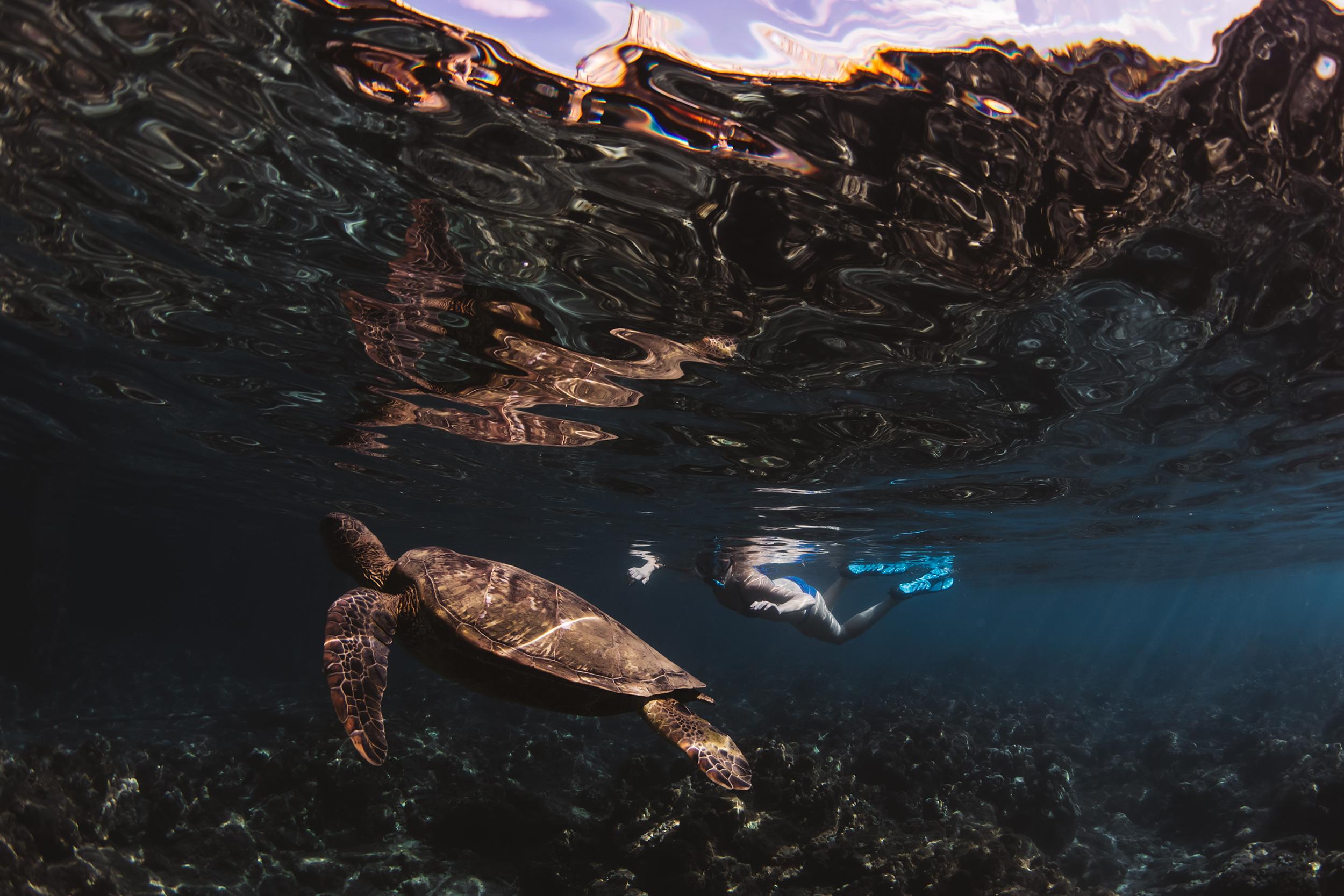 turtle maui hawaii
