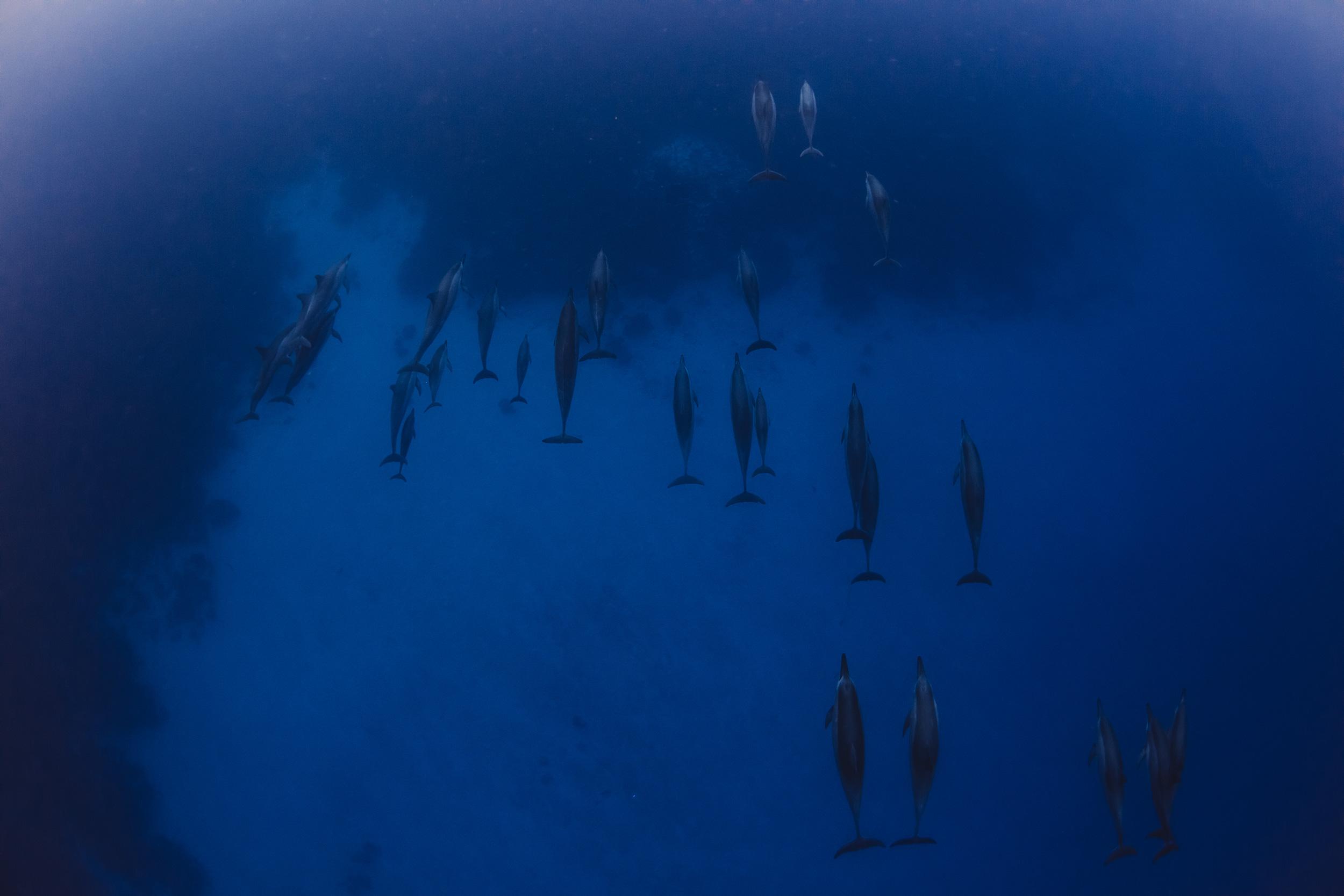 Big Island Dolphins