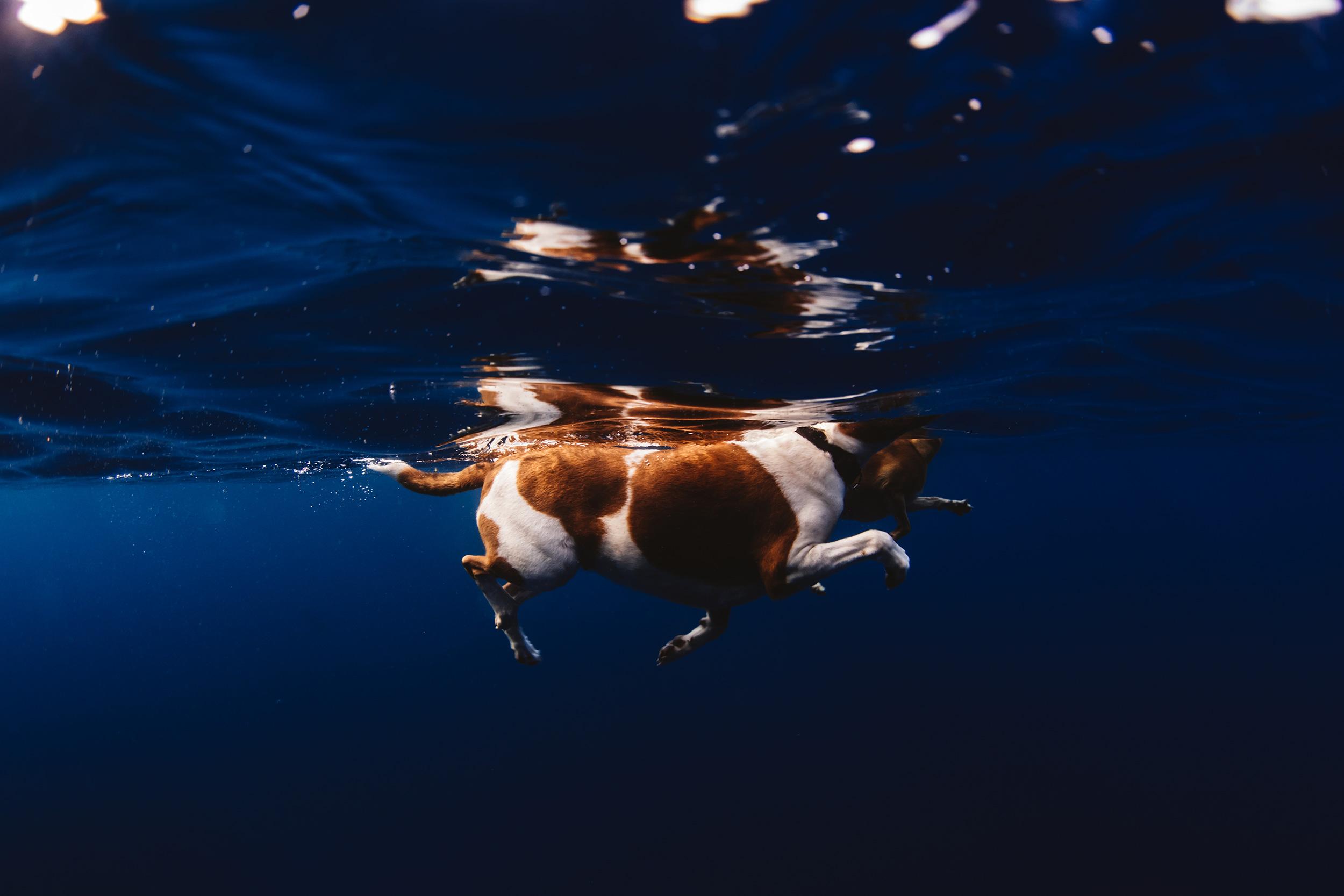 dogs of instagram - ocean culture life