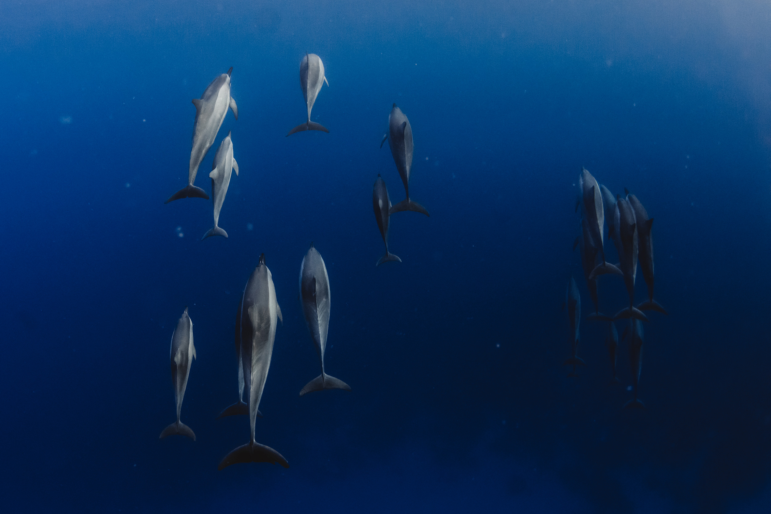 Dolphins Hawaii