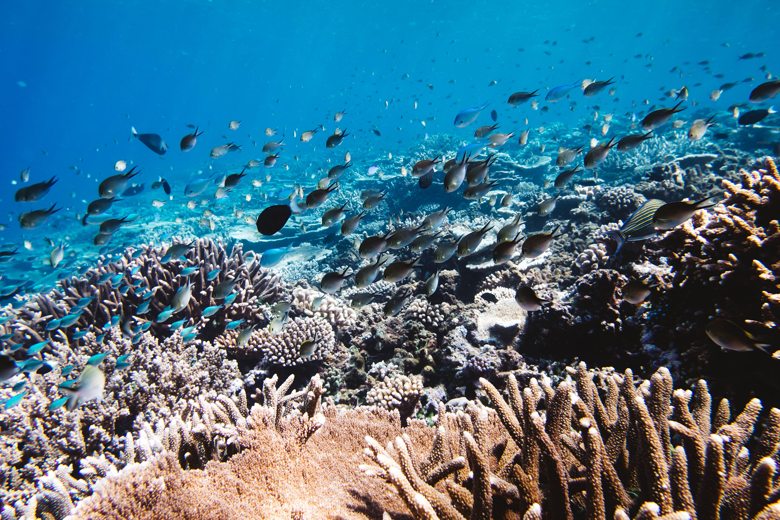 Maldives-273.jpg
