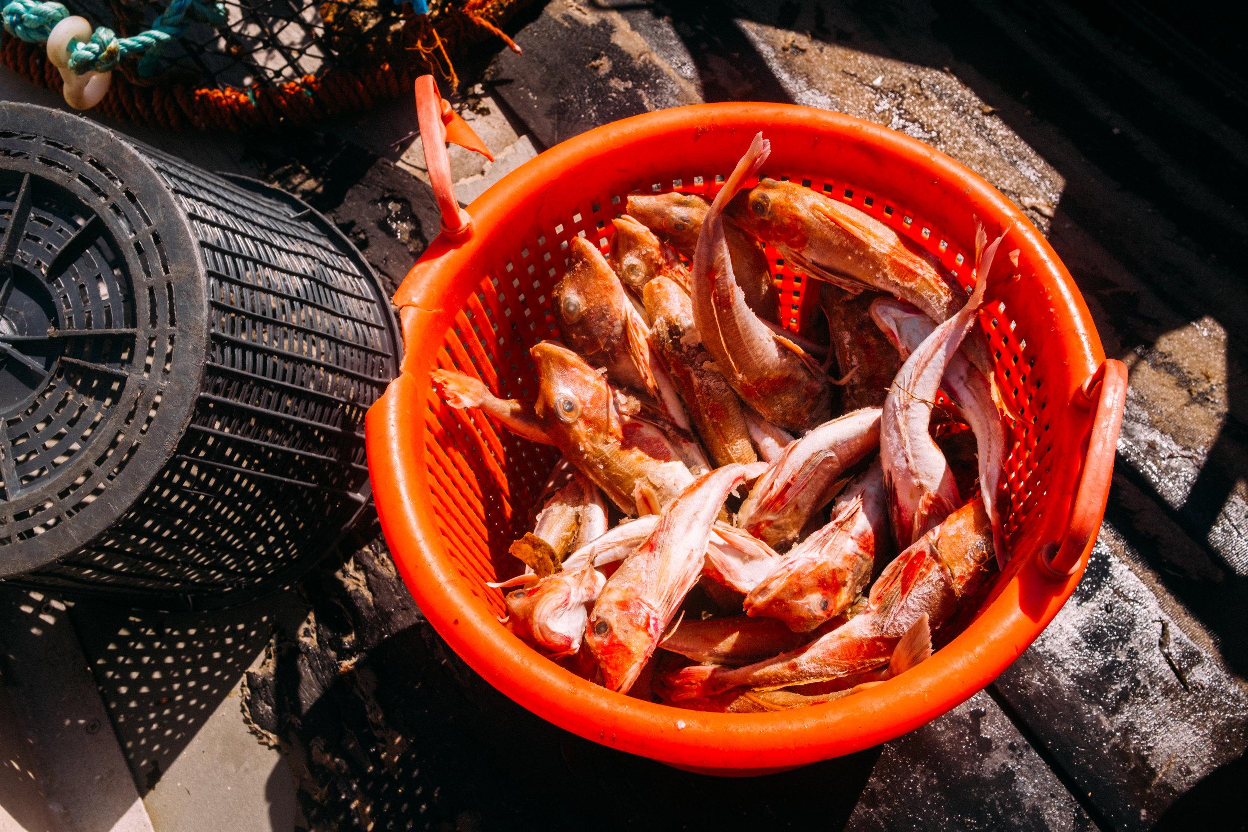 Crabs-20.jpg
