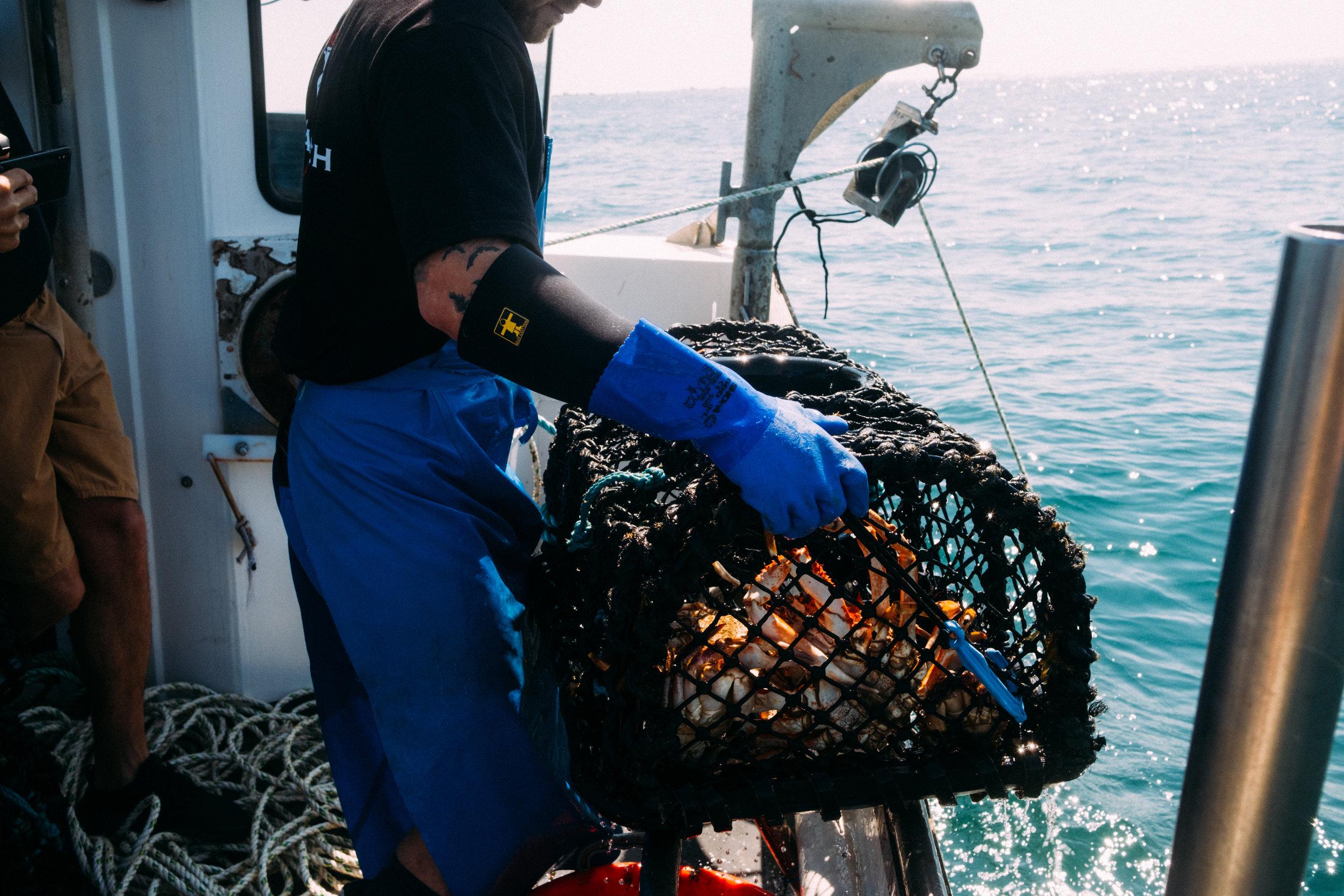Crabs-31.jpg