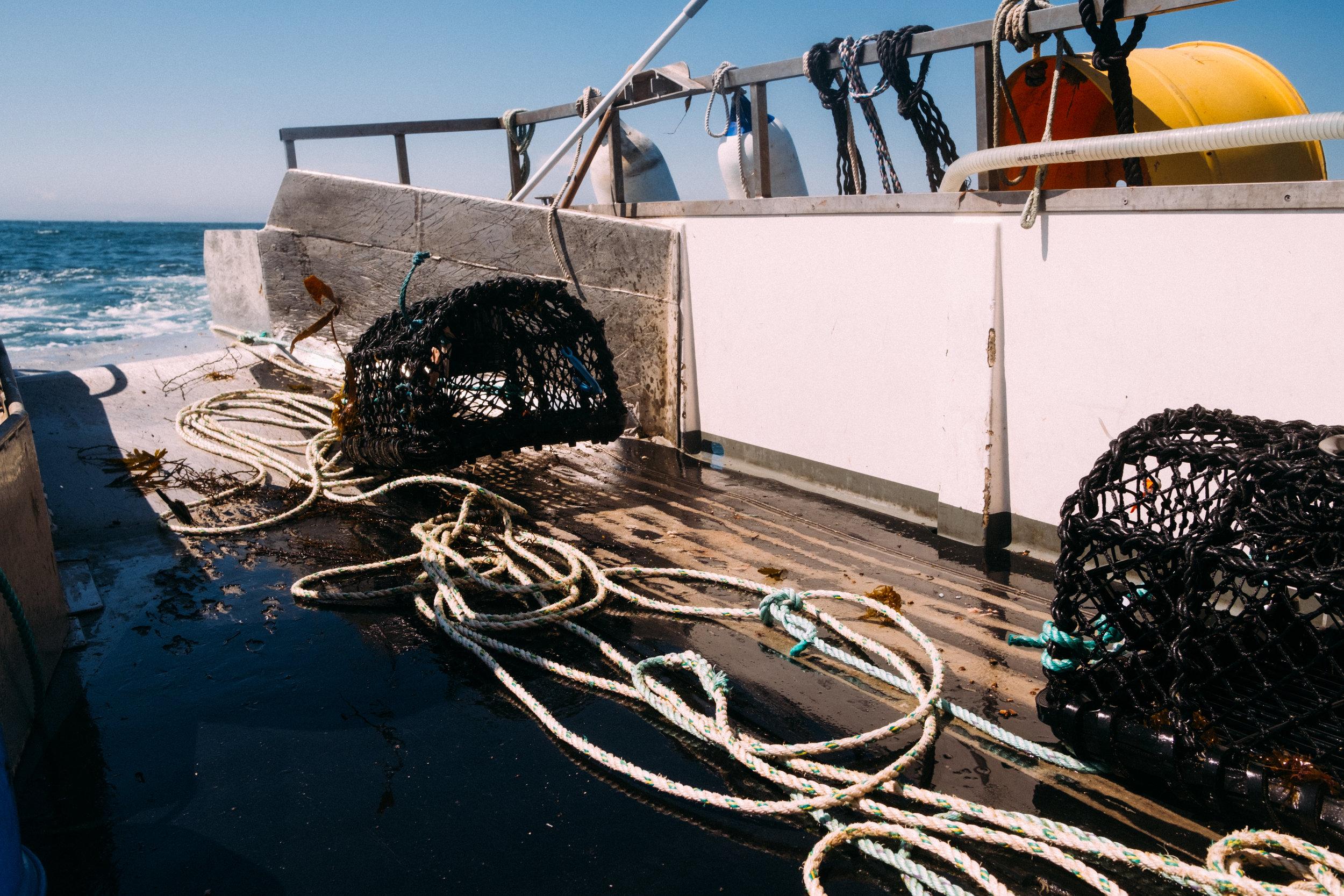 Crabs-46.jpg