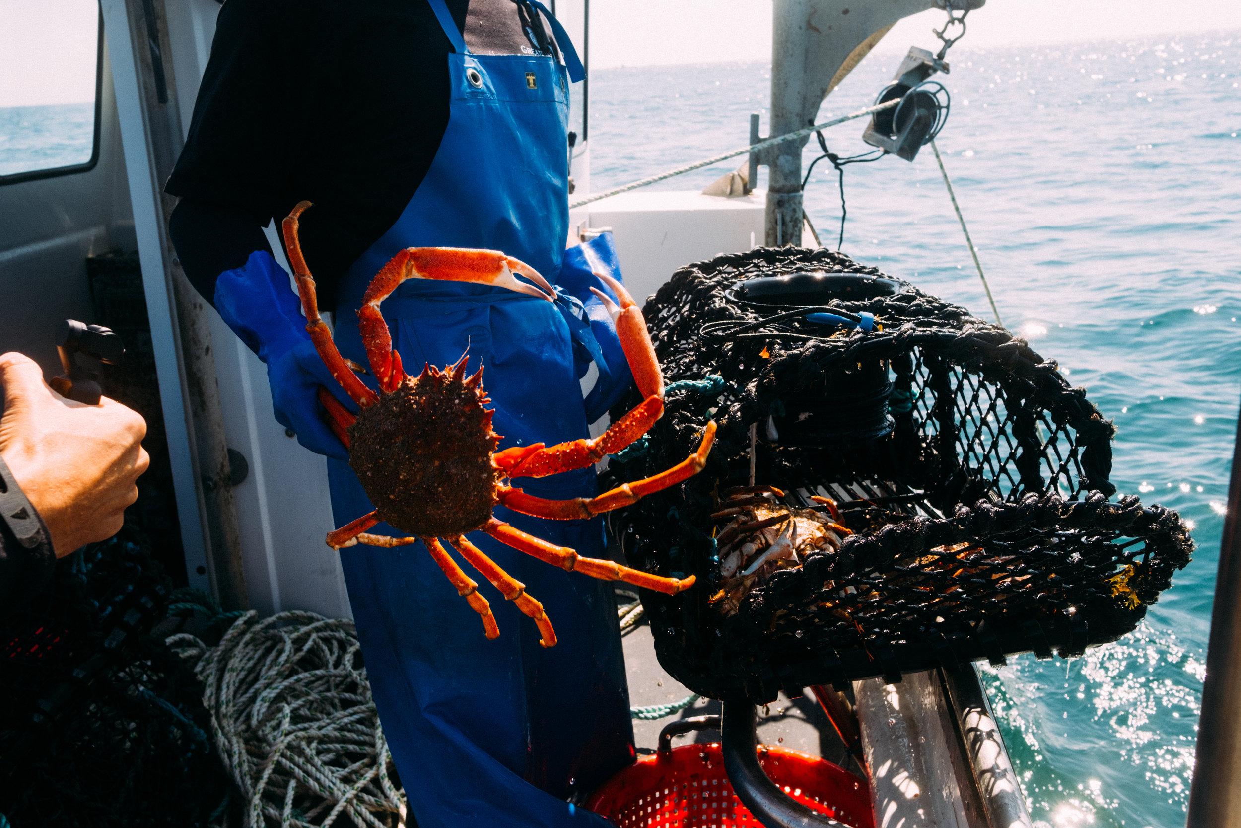 Crabs-32.jpg