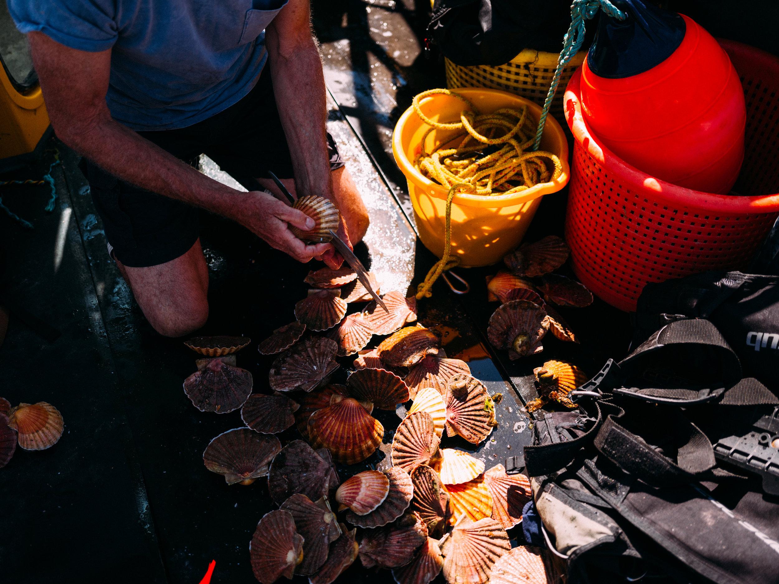 Crabs-136.jpg