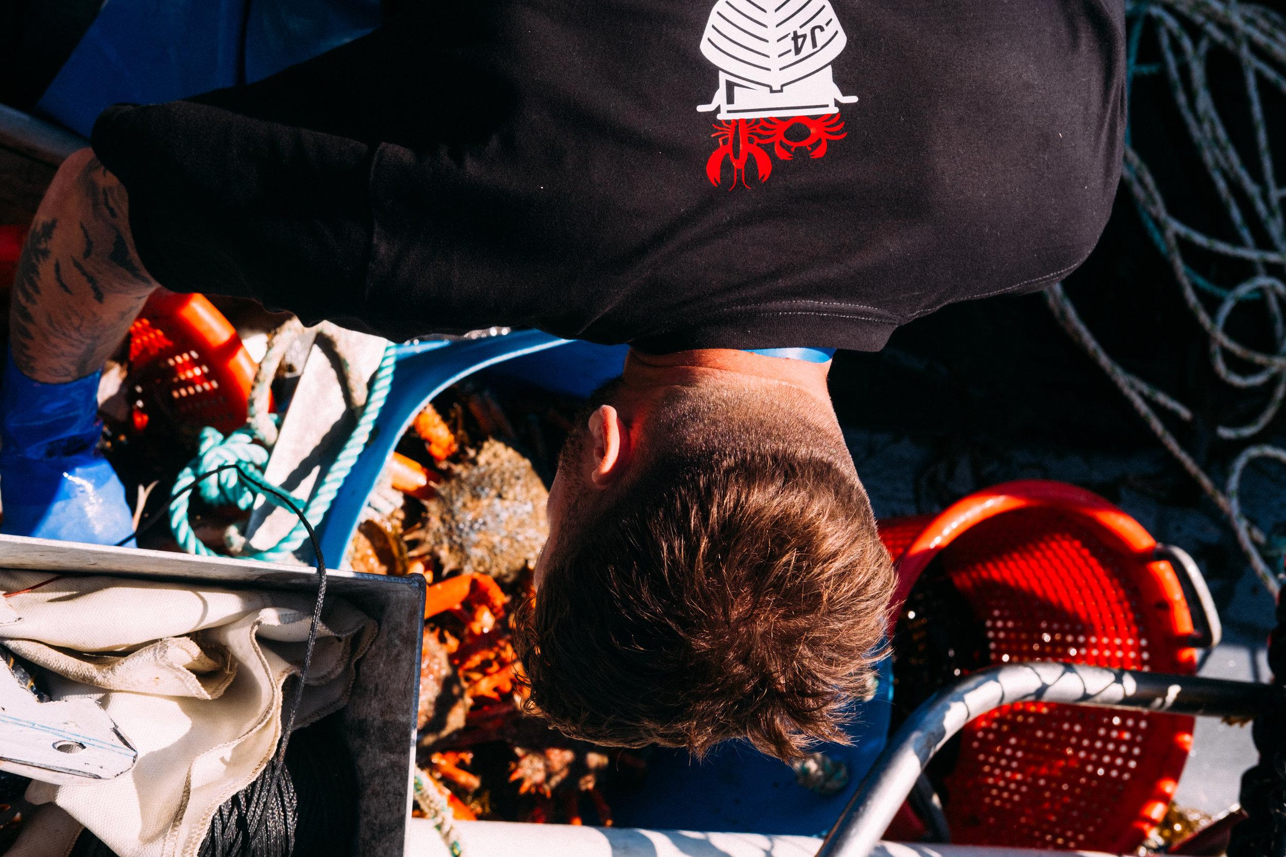Crabs-91.jpg