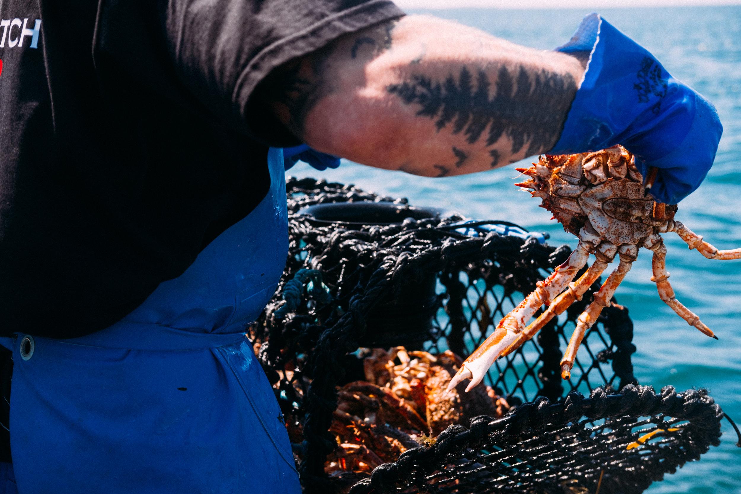 Crabs-107.jpg