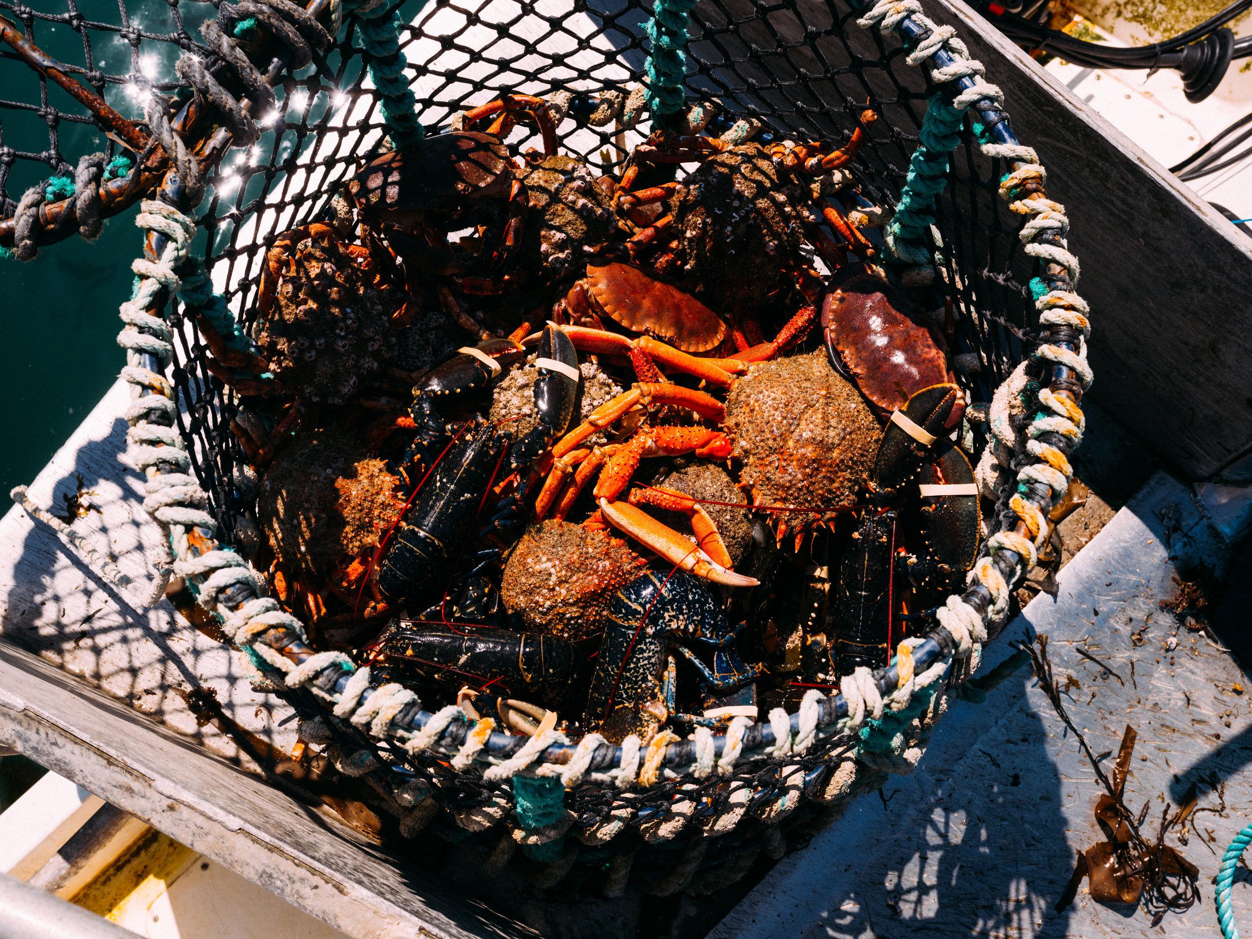 Crabs-121.jpg