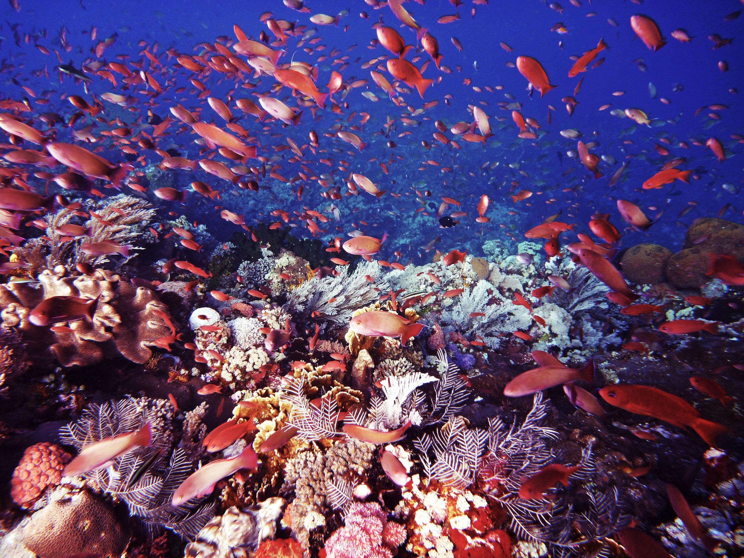 manyfish.jpg