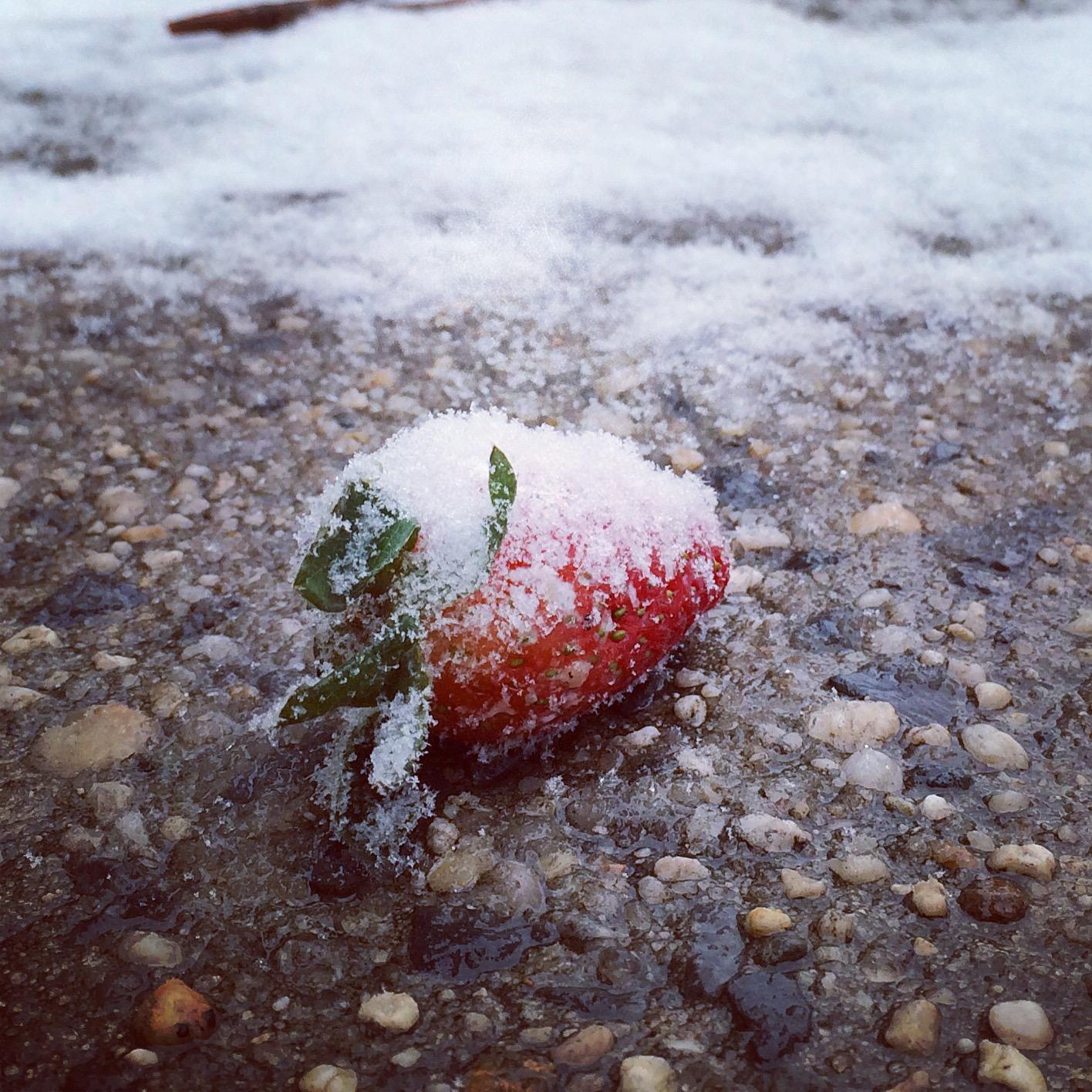 Frozen Strawberry.JPG