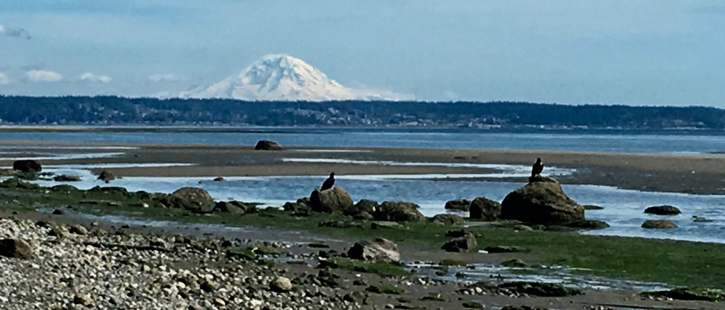 Maxwelton Beach, near my home on Whidbey Island