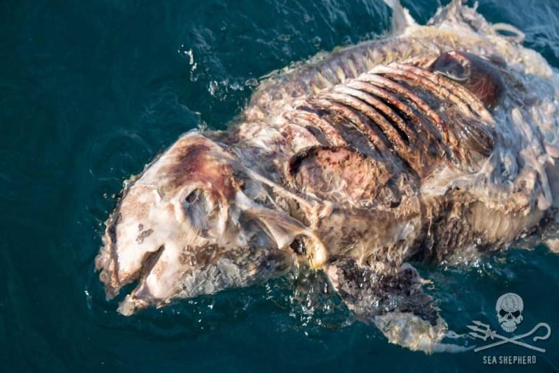 Image by  Sea Shepherd