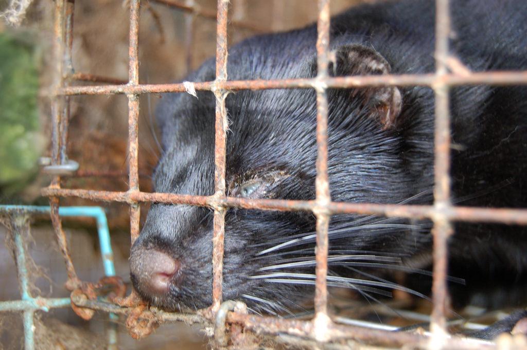 Image by  Nettverk for dyrs frihet  via  Flickr