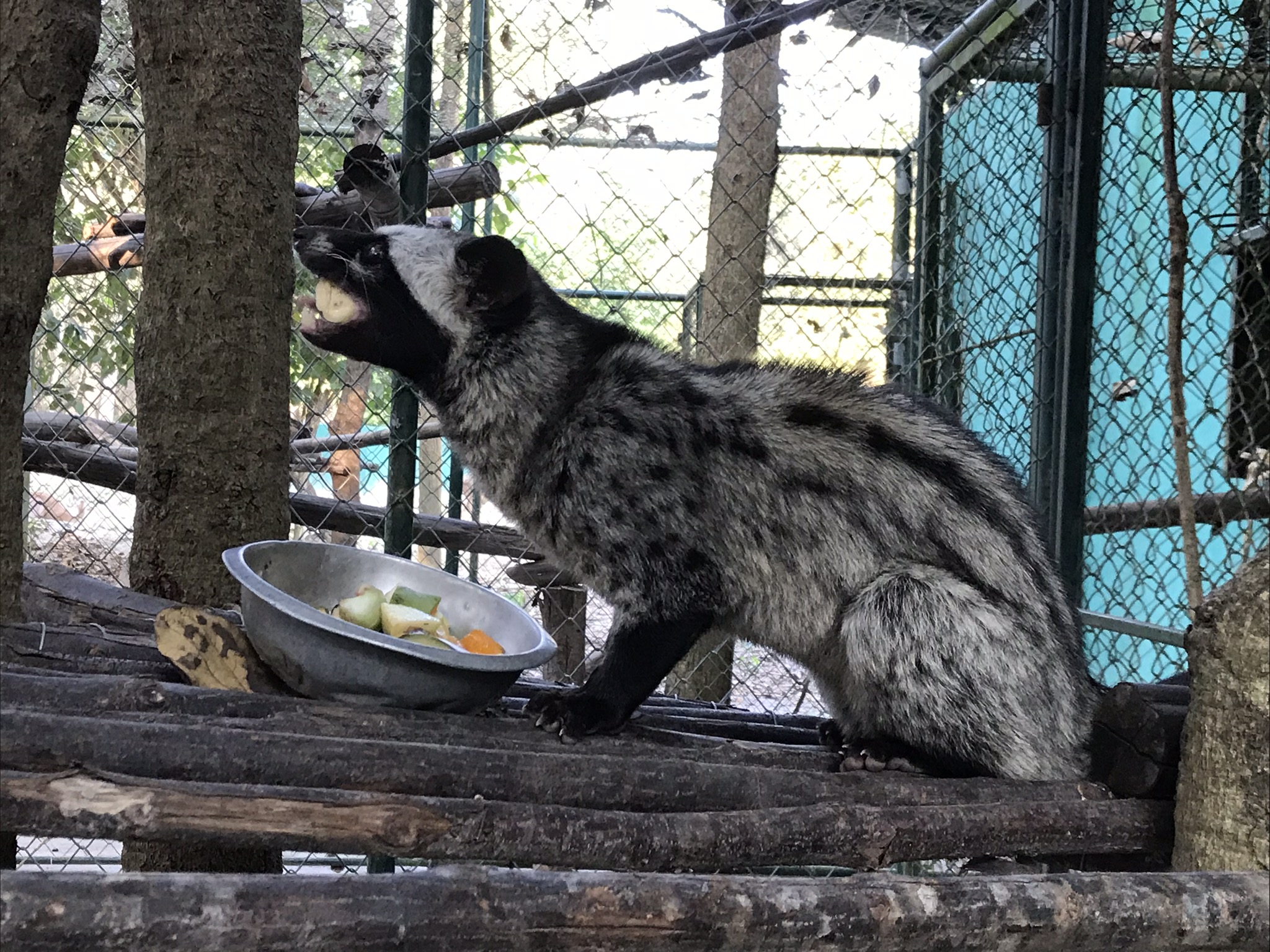 A civet, one of the nocturnals at WFFT