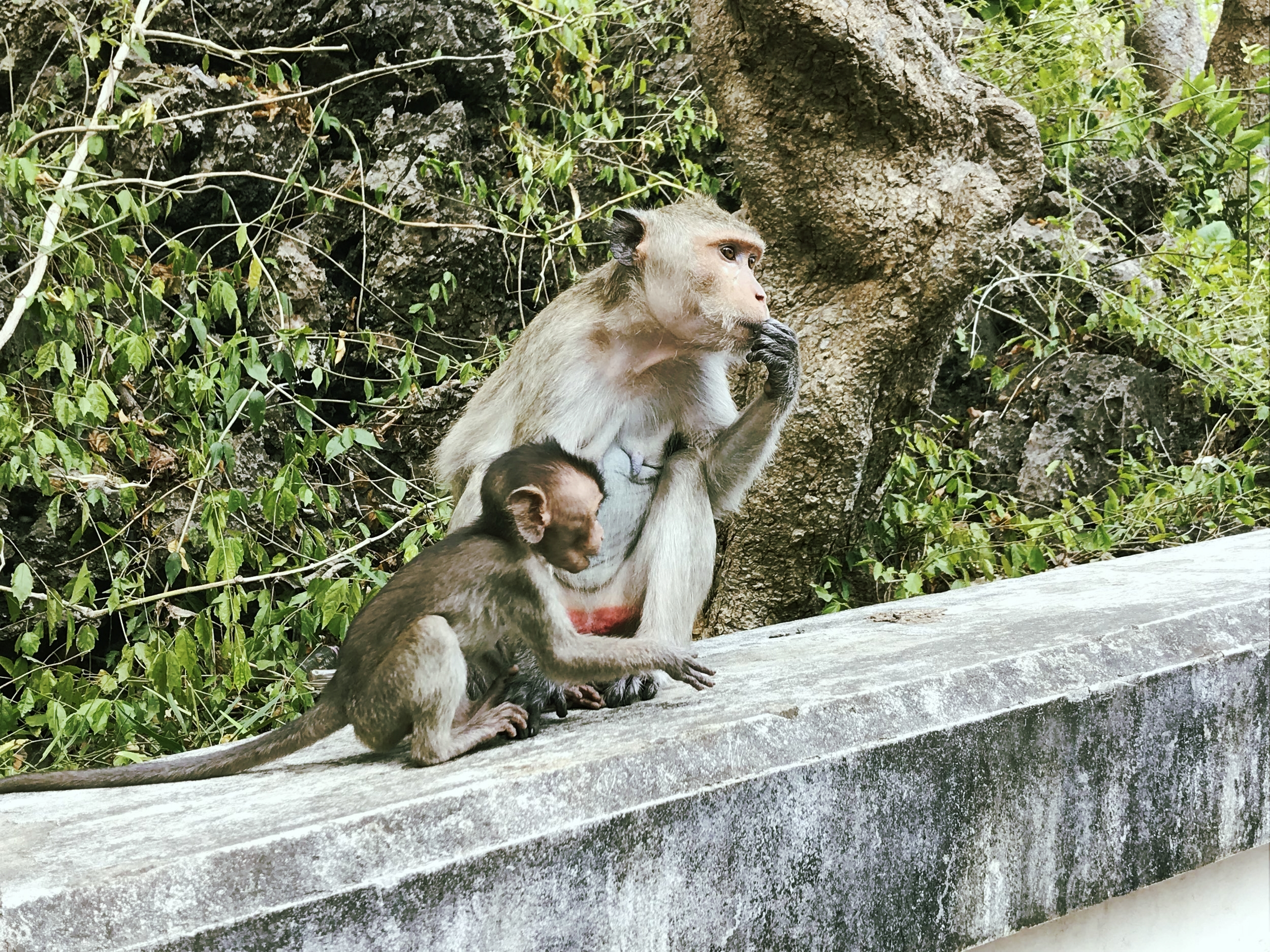 Mother and child macaque outside of Khao Luang Cave