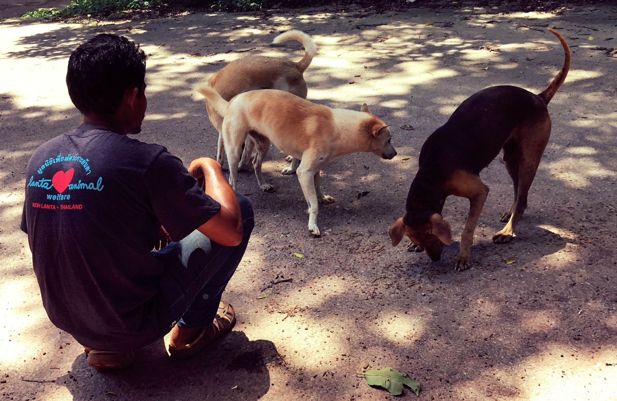 Feeding stray dogs