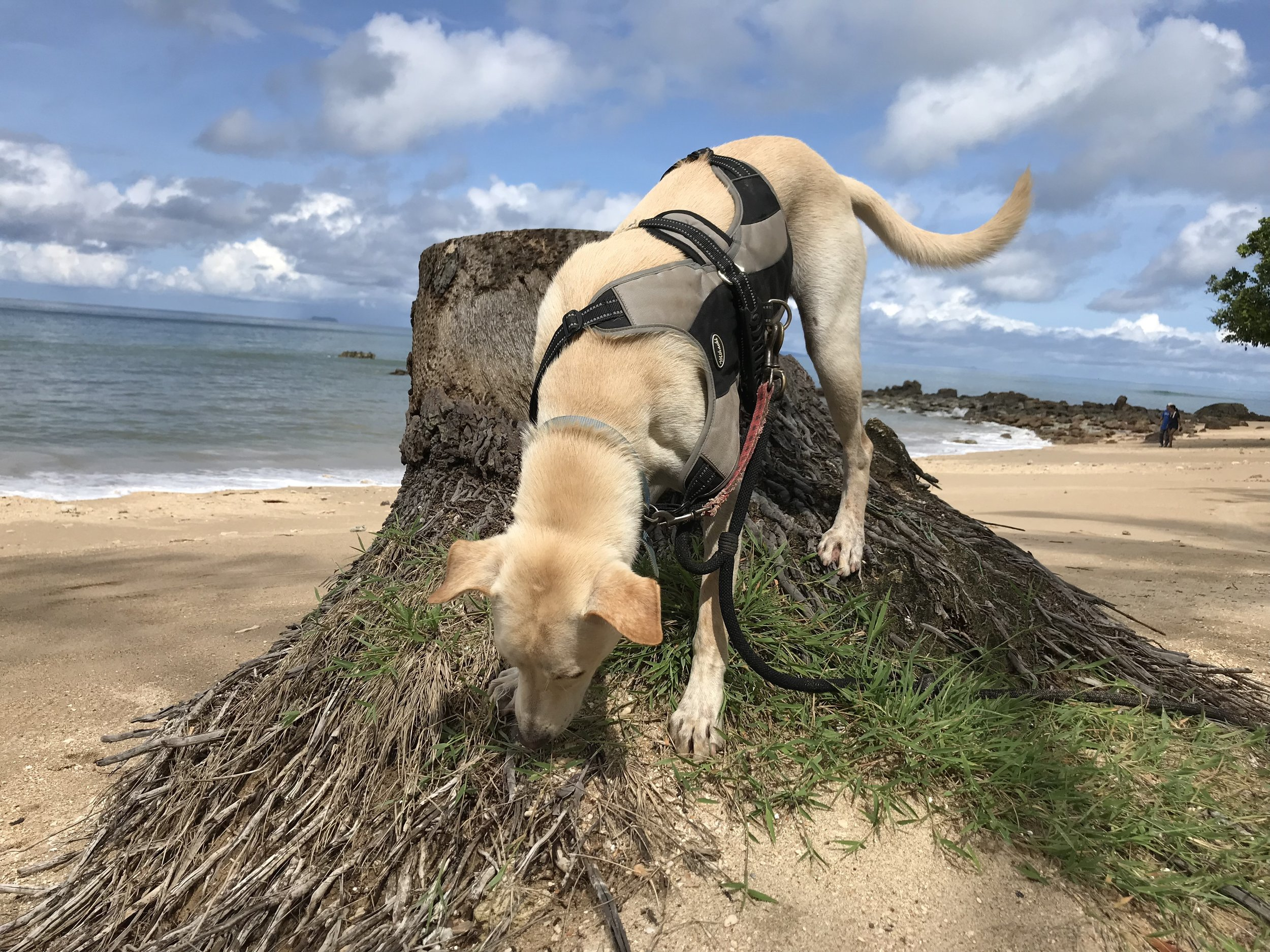 Adventurous Andrzej, a rescue dog in Thailand