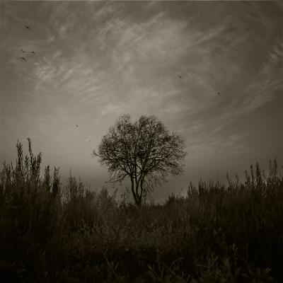 Luís Barreira  árvore, 2014  fotografia