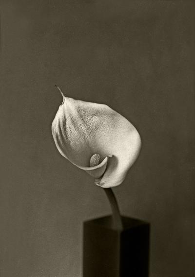 Luís Barreira  Jarro, 1995  Gelatin Silver print  serie:  still life   arquivo:F_201_1064, 1995