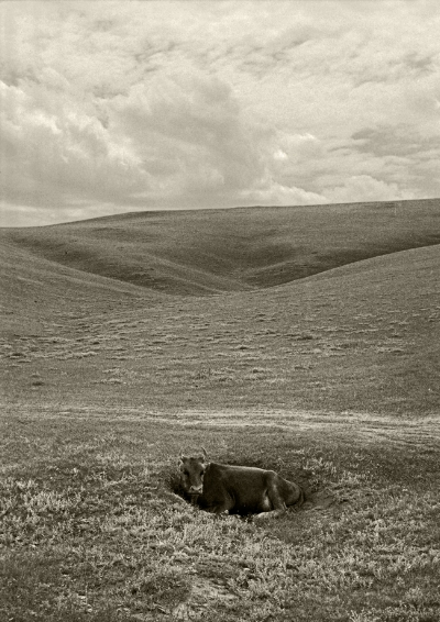 Luís Barreira  cow, 1996  Mongólia  Fotografia  Gelatin Silver print