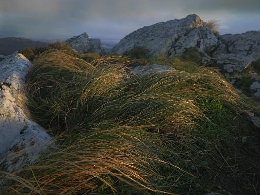 Luís Barreira  Serra de Sintra, 2015  Fotografia  serie:   Landscapes    arquivo:#01_2405, 2015