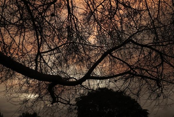 Luís Barreira  s/título, 2013   no parque (LISBOA)  Fotografia  Série: Landscape   arquivo: #12_4259, 2013