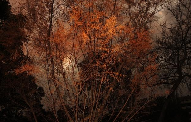 Luís Barreira  árvores, no parque, 2013  fotografia  arquivo: #12_4262, 2013
