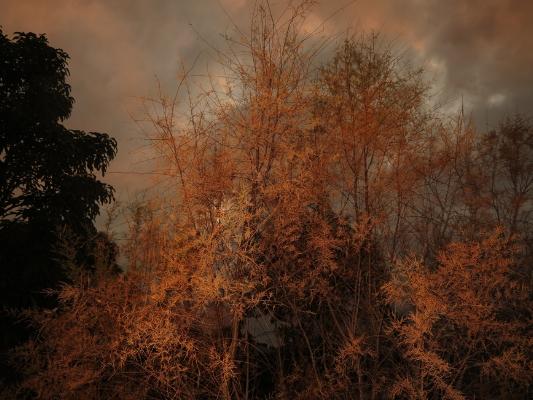 Luís Barreira  árvores,  no parque , 2013  fotografia  arquivo: #12_4260, 2013