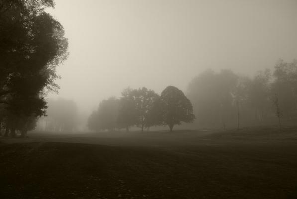 """Luís Barreira  Parque de Vidago, 2011  Fotografia  série:  """"quando estas árvores se desnudam descobrem as minhas raízes""""   arquivo:10_0030, 2011"""