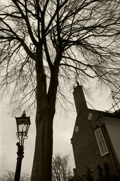 Luís Barreira  Tree in York, 1987  Fotografia  Gelatin Silver print  arquivo:F_036_4968, 1987