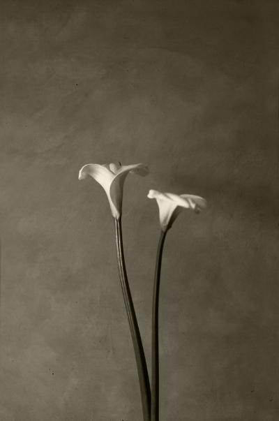 Luís Barreira  Jarros, 1991  Fotografia  Gelatin Silver print  série: Still Life  arquivo:F_534_20417, 1991