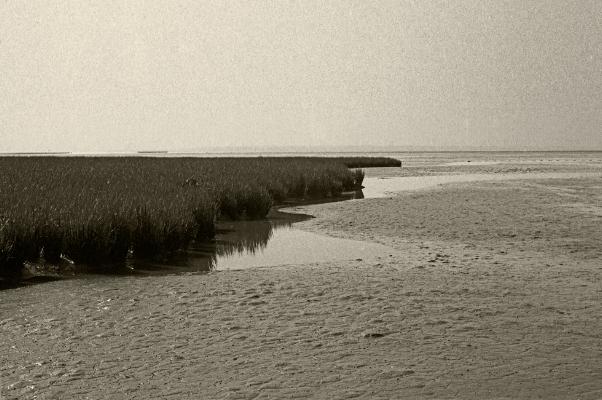 Luís Barreira  Sapal do Tejo - Pancas, 1993  Fotografia  Gelatin Silver print  Série:   Landscapes    arquivo:F_169_11242, 1993