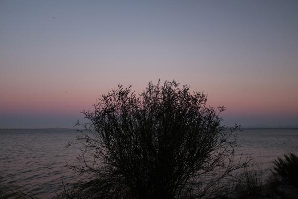 Luís Barreira  Noite de Verão IV, 2017  Parque das Nações  Lisboa  Fotografia  Série: no parque  arquivo:07_14_DSCF1309, 2017