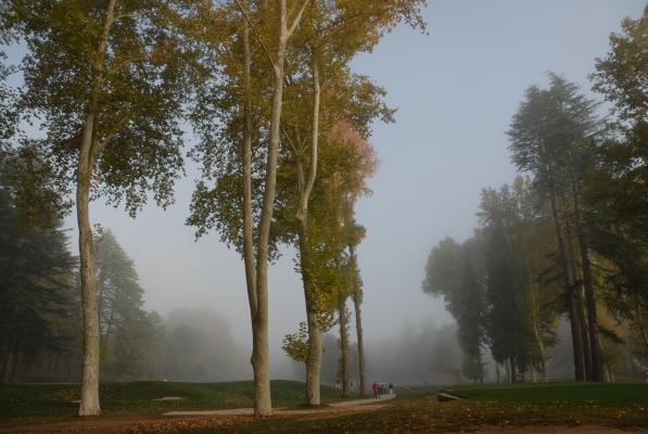 """Luís Carvalho Barreira  Vidago, 2011  Série: """" quando estas árvores se desnudam, descobrem as minhas raízes """"  Fotografia  arquivo: 10_28_NIK_0044, 2011"""