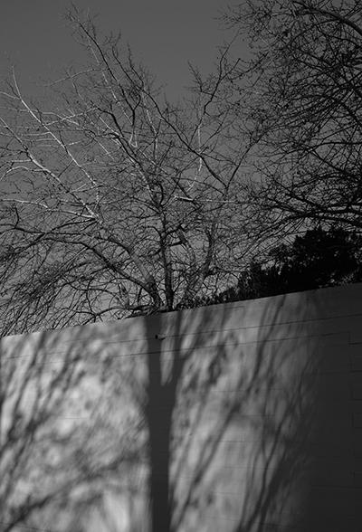 Luís Barreira  shadows II, 2019  série: no parque  Fotografia  arquivo: 2019_01_26_DSCF1670