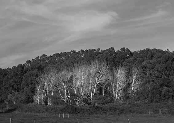 Luís Barreira  white woods, 2019  Quinta do Pisão  série: Landscapes  Fotografia  arquivo: 2019_02_24_IMG_0592