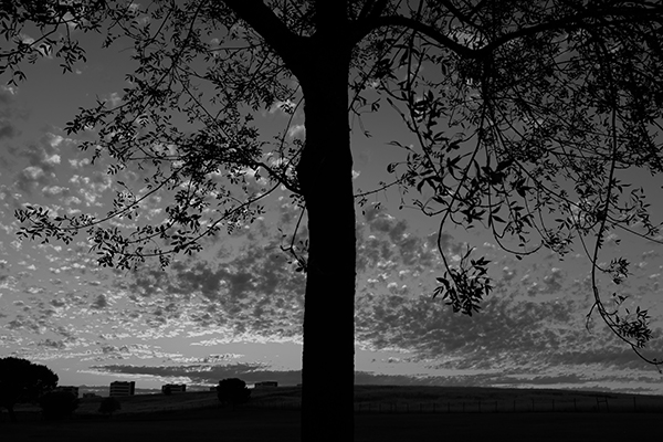 Luís Barreira  sunset, 2019  Parque das Nações, Lisboa  série: no parque  Fotografia  arquivo: 2019_06_17_DSCF2911