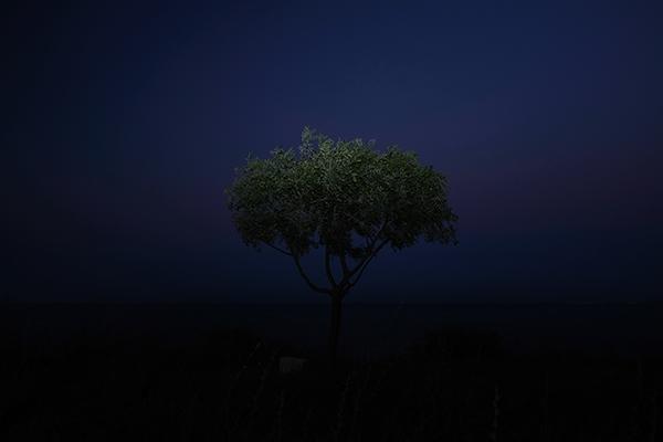Luís Carvalho Barreira  árvore, 2019  série:  Fotografia  arquivo: 2019_07_21_DSCF3196  câmara: Fujifilm X 100F