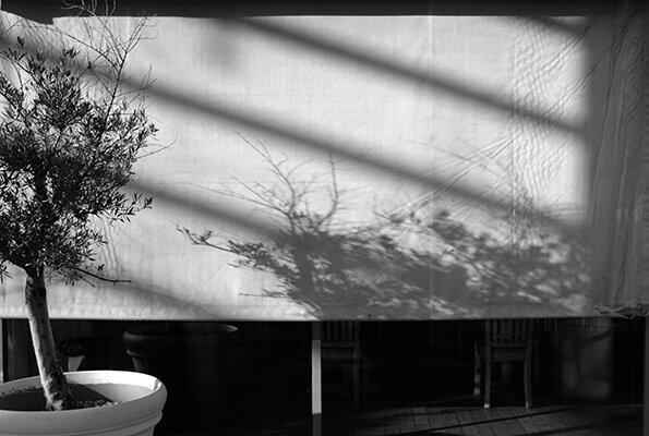 © Luís Carvalho Barreira  shadows, 2019  serie:  no parque   Fotografia  arquivo: 2019_10_12_DSCF3354  câmara: Fujifilm X 100F