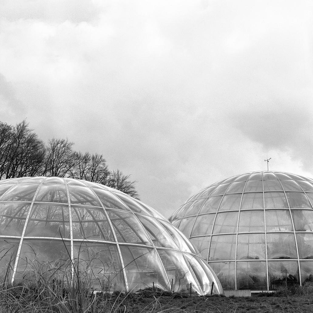 13.03.16 Botanischer Garten , 2016 archival photographic print, 32 x 32 cm