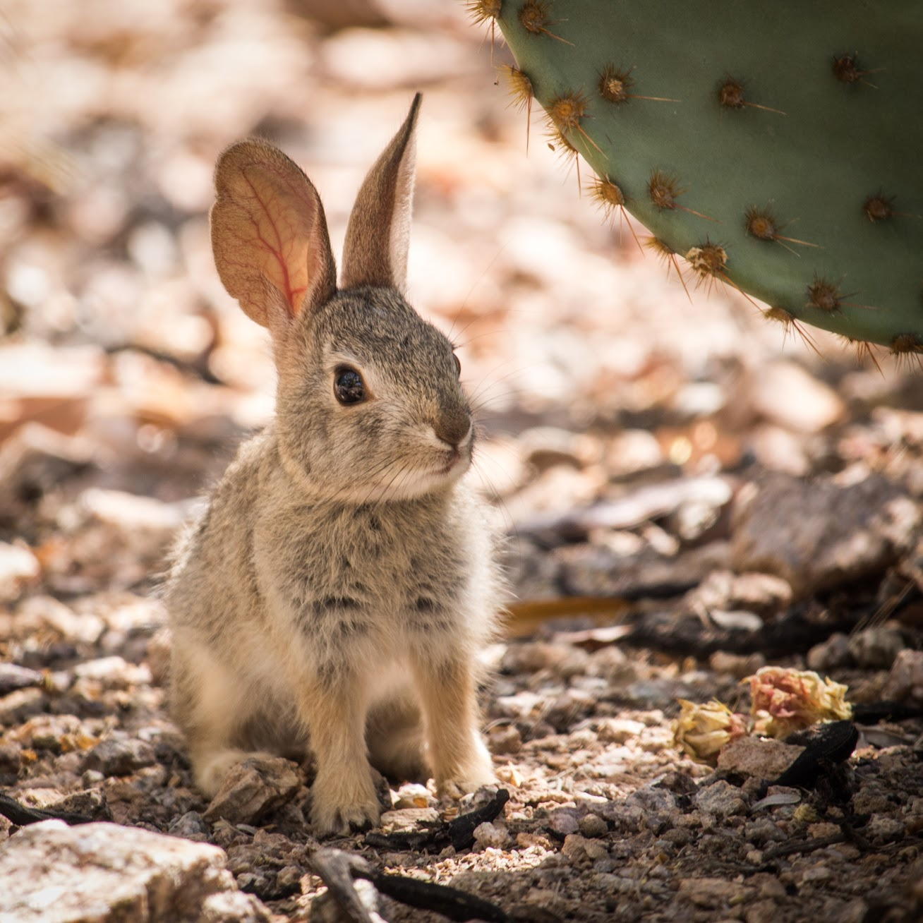 Elizabeth Bunny.jpg
