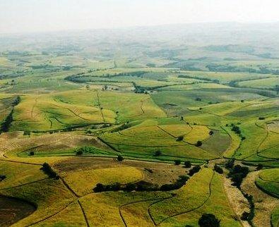 Rolling sugar cane fields of Kwa-Zulu Natal