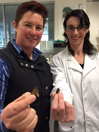 Photo:  Associate Professor Kerry Wilkinson and Crystal Bayldon are researching Australians attitudes to eating insects. (ABC News: Rebecca Opie)