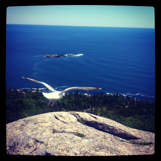 Gorham Trial, Acadia National Park