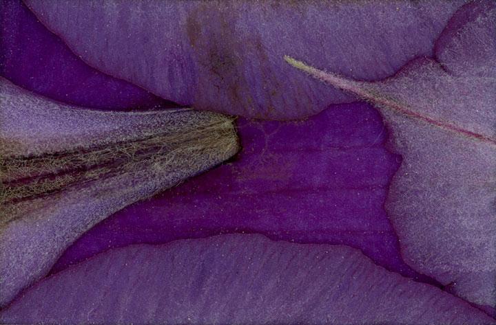 edna-clematis-298-side-web.jpg