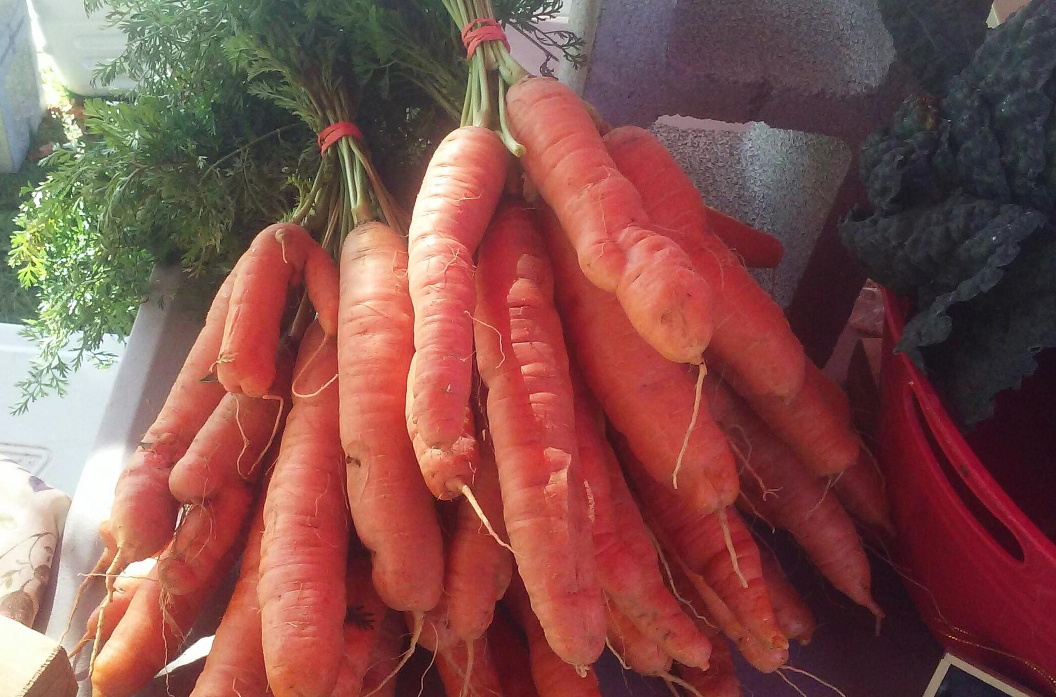 Organic Carrots at Liberty Farms.jpg