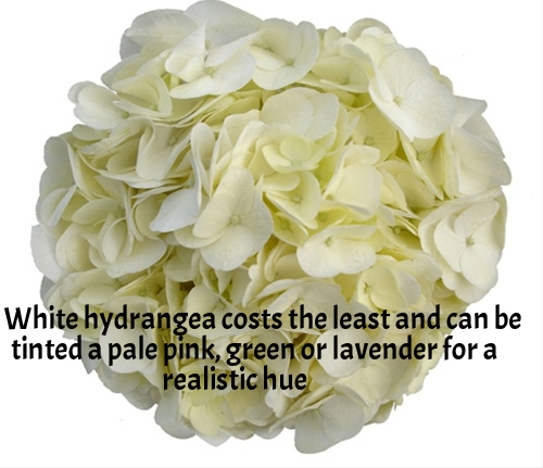 1-White Hydrangea.jpg