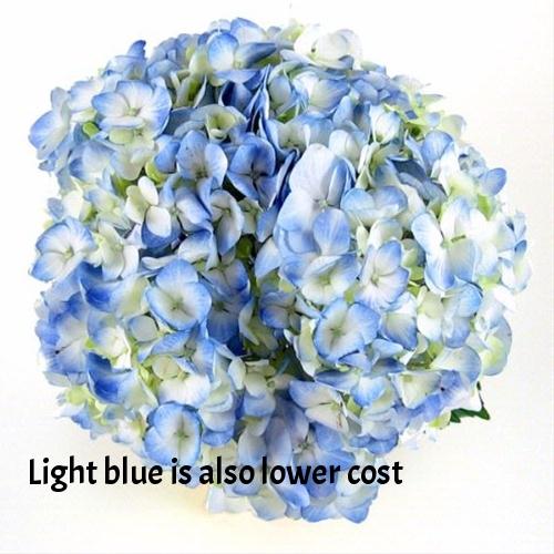 Light%20Blue%20Hydrangea.jpg