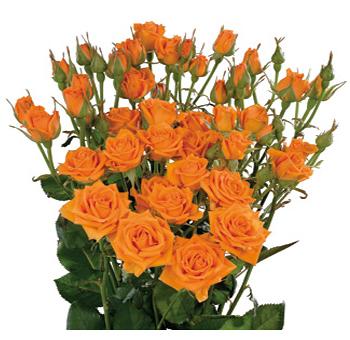 07-orange-wholesale-spray-rose.jpg